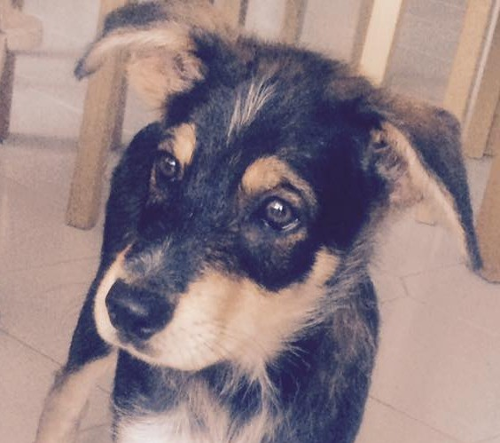 Well done! You found Yoda the puppy a home.